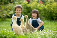 Adorable preschool children, boy brothers, playing with little ducklings Stock Photos