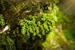 Green mos on the tree Stock Photos
