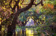 Mangroves in Cambodia Stock Photos