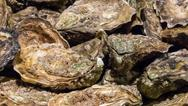The fresh oysters at the fish market. Stock Photos