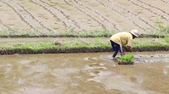 Men working hard on rice field in Bali. Indonesia Stock Footage