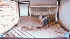 Two rabbits in cage Stock Footage