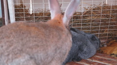 Farm rabbits in cage Stock Footage
