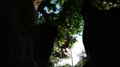 A child hanging on a rope swing Stock Footage