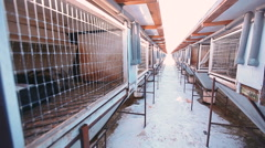 Rabbit farm. cages for animals Stock Footage
