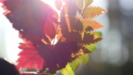 Autumn leaves on a gleam. Stock Footage