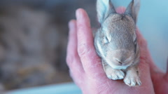 Little rabbit in hands Stock Footage