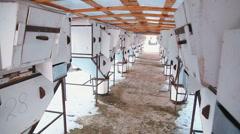 Livestock farm. rabbit farm Stock Footage