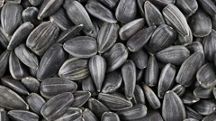 Sunflower seeds seeds close up.  Front of the camera rotates sunflower seeds Stock Footage
