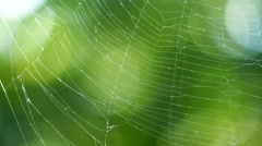 Loop with spider web in the wind on background of green leaves and sun glare. Stock Footage