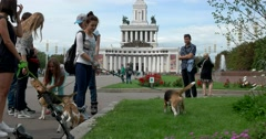 """Girls with dog breed """"Beagle"""" at the main entrance VVC Stock Footage"""