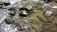 View of running wild river 4K Stock Footage
