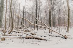 Scandinavian forest in the winter Stock Photos