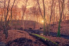 Sunrise in a forest swamp Stock Photos