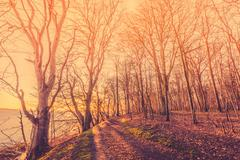Sunrise in a forest with spooky trees Stock Photos