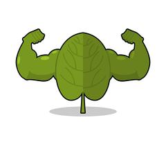 Spinach strong. Useful Herbs with big muscles. Green leaves lettuce powerful  Stock Illustration