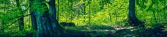 Fairytale forest with green trees Stock Photos