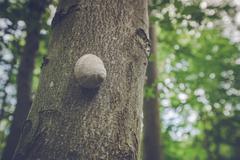 Escargot snail on a tree Kuvituskuvat