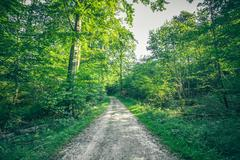 Forest landscape in the spring with a nature trail Stock Photos