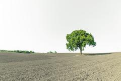 Rural landscape with a single green tree Stock Photos