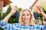 Woman in checked shirt holding two bunches of grapes Stock Photos