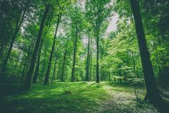 Green trees in a forest at springtime Stock Photos
