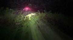 Amanita Muscaria Fly Agaric magic mushroom rays ground level forest Iceland Stock Footage