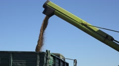 Freshly harvested grain cereal falling into truck trailer on blue sky background Stock Footage