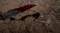Bloody knife with blood dripping, falls out of the hands on the ground Stock Footage