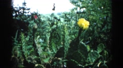 1962: a large beautiful yellow flower surrounded by a tropical foliage Stock Footage