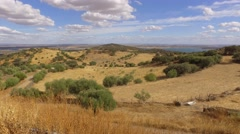 Cork oaks forest field  in Alentejo, portugal 4k Stock Footage