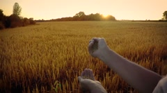 Man pours wheat on background of a wheat field in the sunset rays Stock Footage