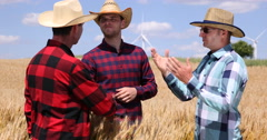 European Wheat Cultivator Men Checking Their Golden Cereal Plain in Summer Day Stock Footage