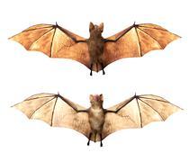 Vampire bats isolated on white background Stock Illustration