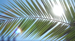 The sun's rays make their way through the branches of palm trees Stock Footage