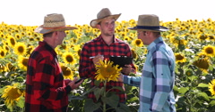 Young Farmer Man Offering Sunflower Plain Collaboration to Two Agriculturists Stock Footage