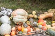 Pile of colored pumpkins and gourds in Moldova Stock Photos
