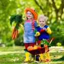 Kids picking vegetables on organic farm Stock Photos
