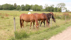 Horses standing by fence in meadow. Stock Footage