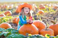 Child playing on pumpkin patch Stock Photos