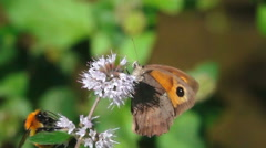 Butterfly bumblebee and wasp nature wildlife Arkistovideo