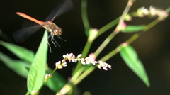 Beautiful dragonfly landing on flower Stock Footage