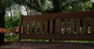 Bench under the tree in the Park Stock Footage