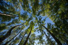 Looking up in Forest - Green Tree branches nature abstract Stock Photos