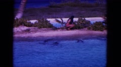 1964: feeding the dolphins in the sea. HAWAII Stock Footage
