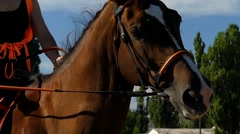 Head of Horse in Slow Motion. Stock Footage
