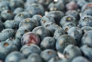 Bilberry or blueberry as texture background Stock Photos
