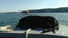 Black dog lying on bow of boat speeding toward seaplane Stock Footage
