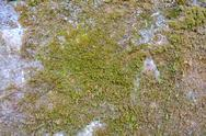 Close-up view of moss-covered wall Stock Photos