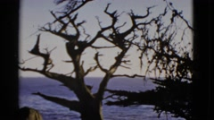 1952: a breathtaking view of trees and water SAN FRANCISCO, CALIFORNIA Stock Footage